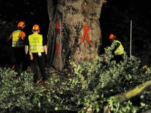 Bauarbeiter beim Abholzen der ersten Bäume. Archivbild: Bernd Weißbrod